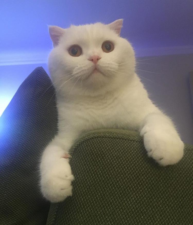 sevimli tatlı kedi