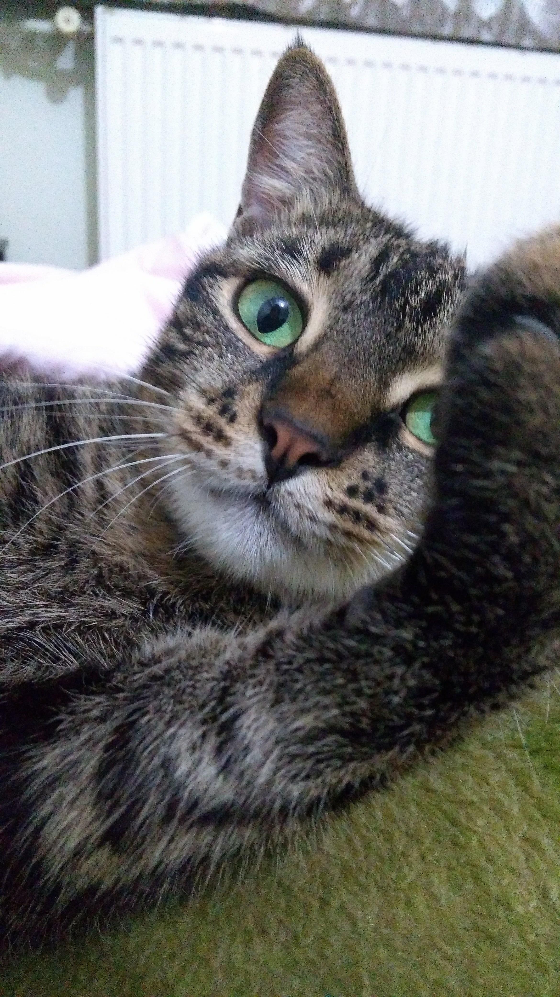 yeşil gözlü kedi